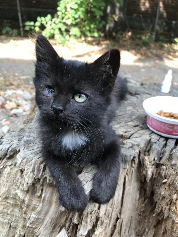 Котёнок девочка 3 месяца в самые добрые руки - Фото 8