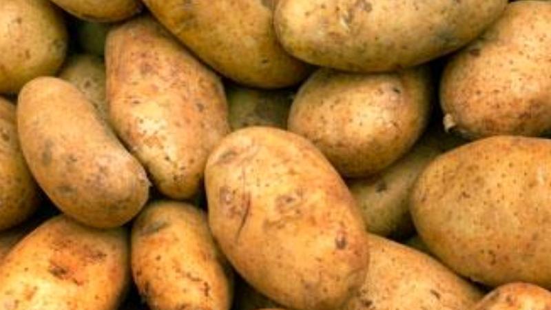 Продам картошку картоплю бараболю . Велика картошка // дрібна !