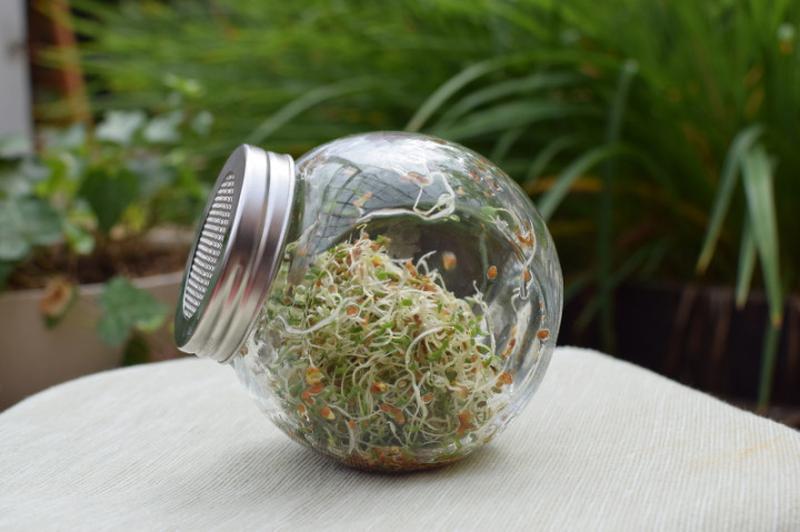Проращиватель семян 650мл | банка- спраутер | Спраутер  стекло