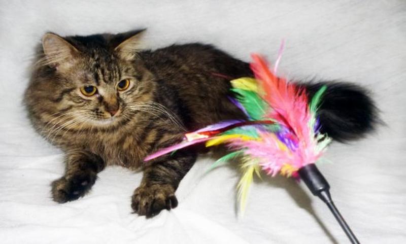 САМИР - Сибирская, МЕТИС, роскошнейший пушистый котик, 1 год.