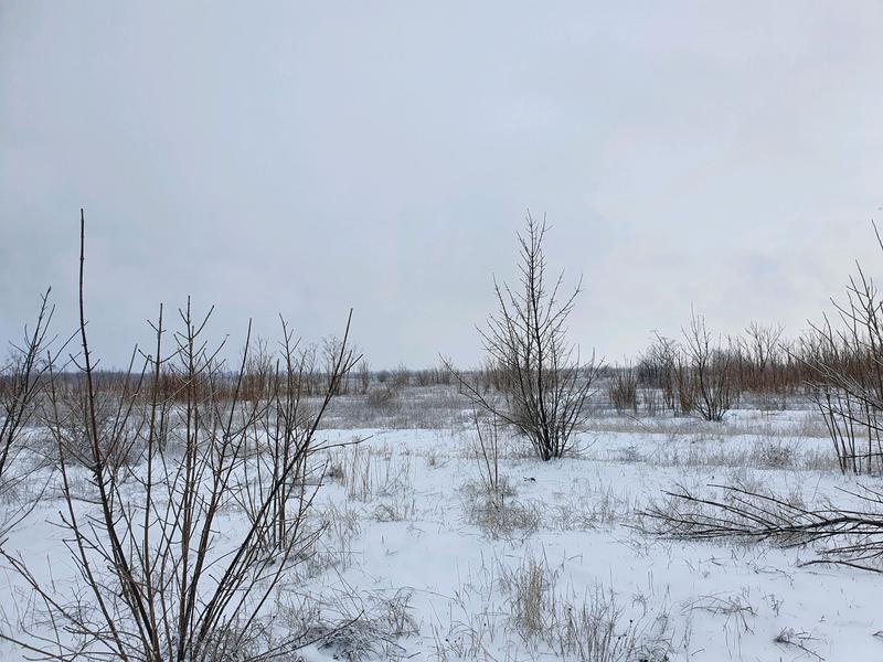 Земельный участок ОСГ (1,9486 га) - Фото 6