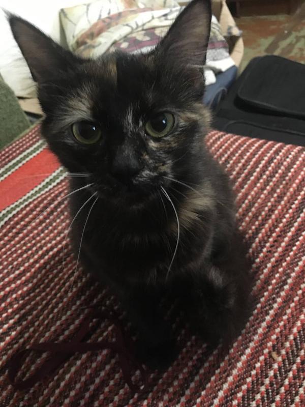 Заберіть безпритульну кішку будь-ласка!