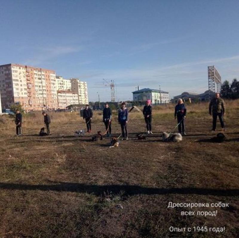 Дрессировка собак всех пород! г. Одесса, пос. Котовского - Фото 3