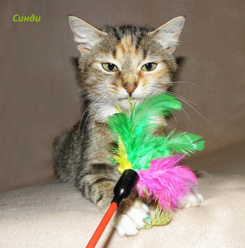 Маленькая, красивая котенок-девочка Синди, похожая на барханную