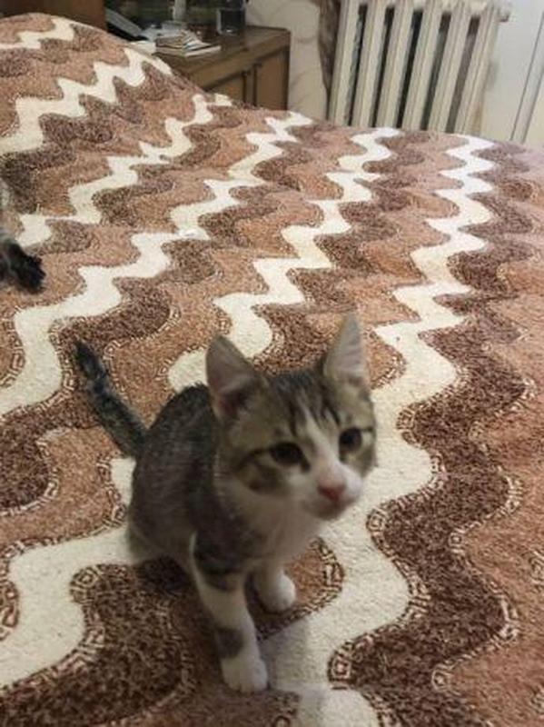 Добрый котенок ищет хозяина