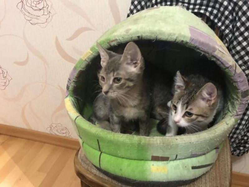Добрый котенок ищет хозяина - Фото 2