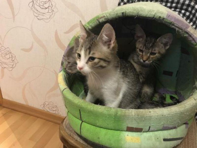 Добрый котенок ищет хозяина - Фото 3