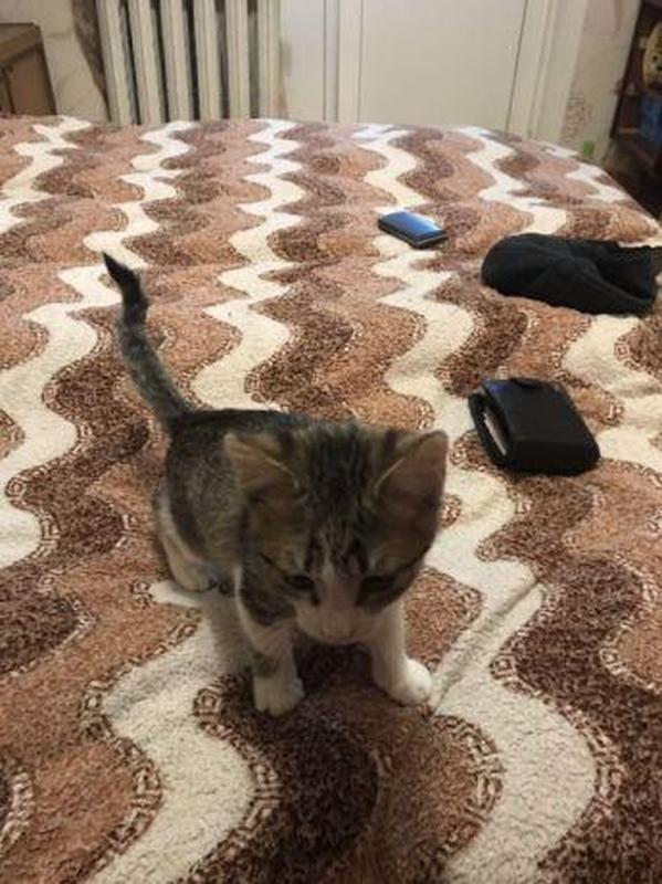 Добрый котенок ищет хозяина - Фото 4