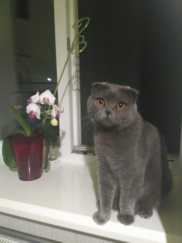 Кошка - Фото 2