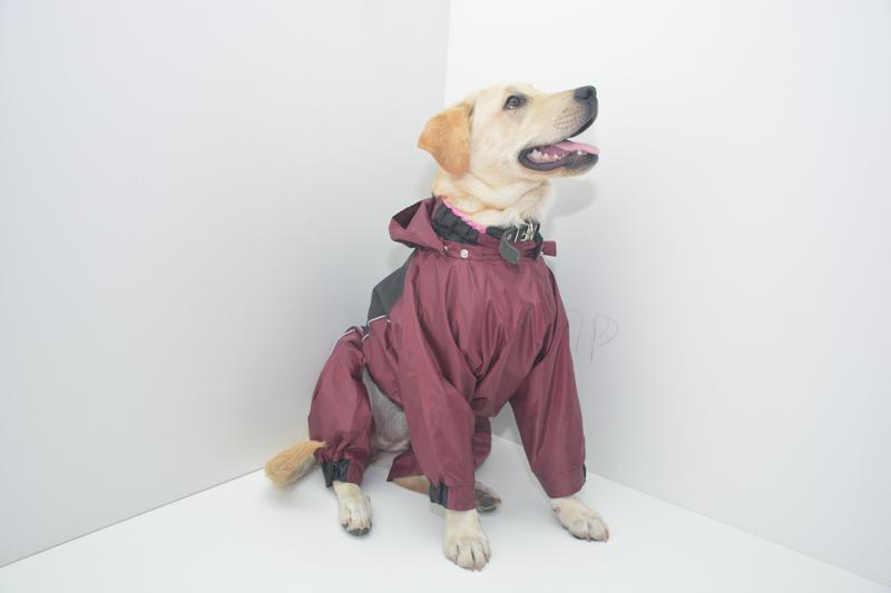 Дождевики комбинезоны для собак - Фото 5