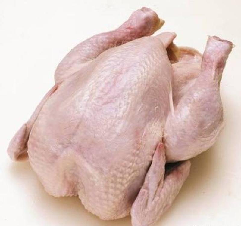 Домашняя курица бройлер