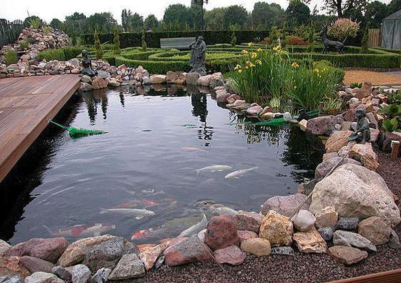 пруд,рыбки,карпы кои,водные растения,нимфеи,ландшафт,водоем,кои