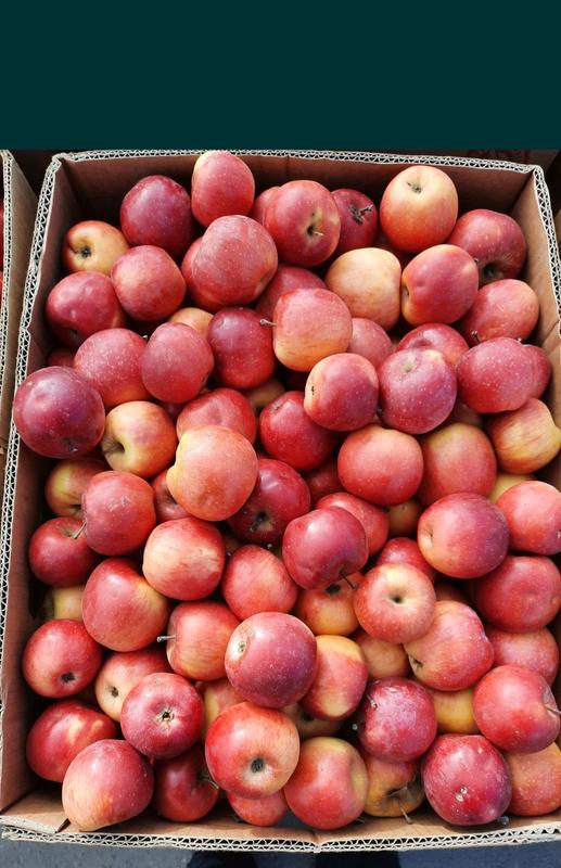 Яблока, яблуко Флоріна домашні не кроплені
