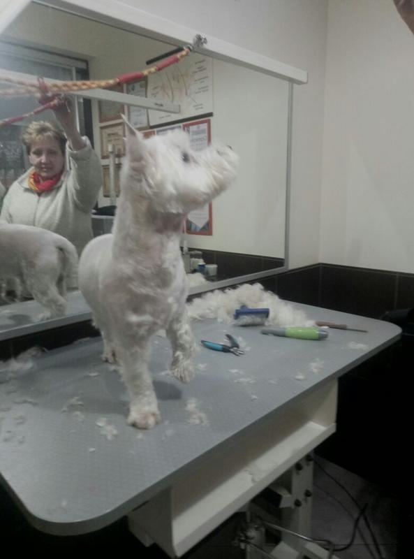 Груминг стрижки собак и кошек - Фото 16