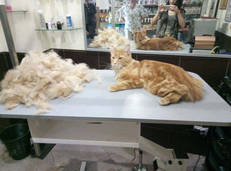 Груминг стрижки собак и кошек - Фото 9