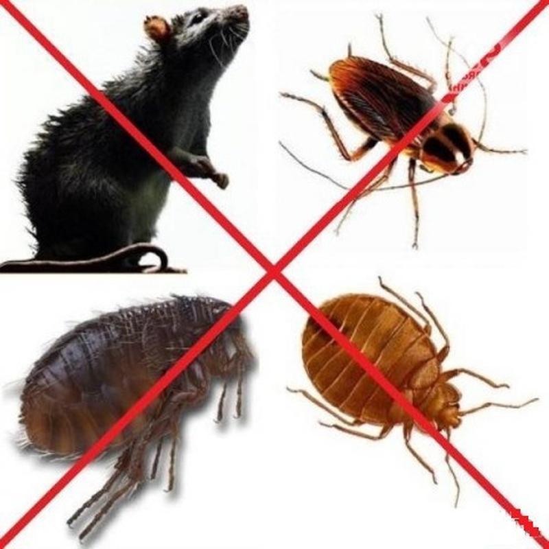 Дезинсекция от вредных насекомых.
