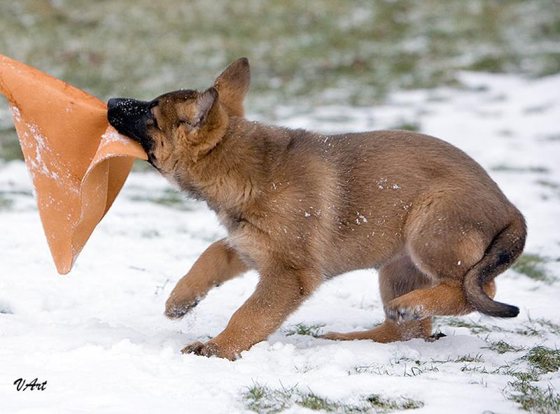 Дрессировка собак - Фото 3