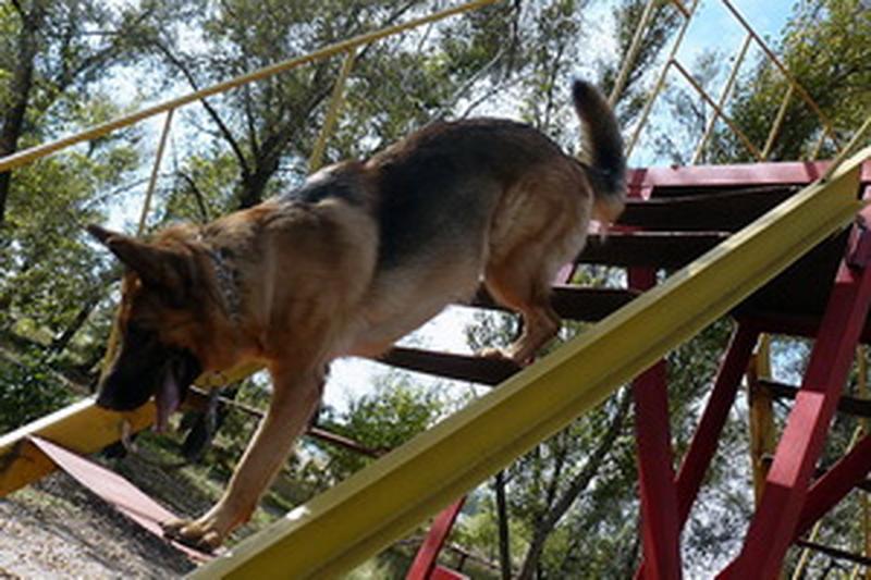 Дрессировка собак - Фото 5