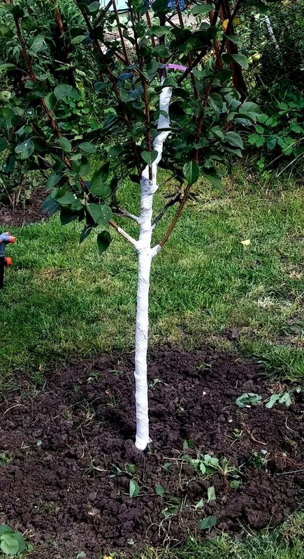 Побілка та обмотування дерев