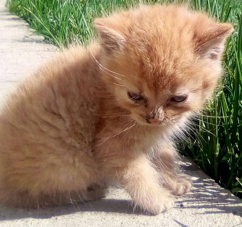 Продам котика????