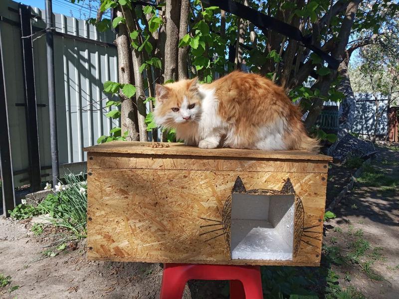 Будка домик для кота или маленькой собаки