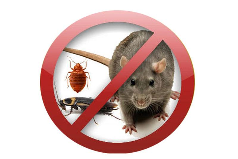 Уничтожаем тараканов, клопов, блох, грызунов в Днепропетровске