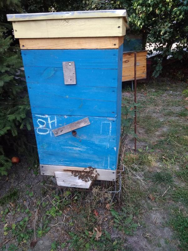 Пчелосемьи пчелопакет кавказянка бакфаст карника итальянка