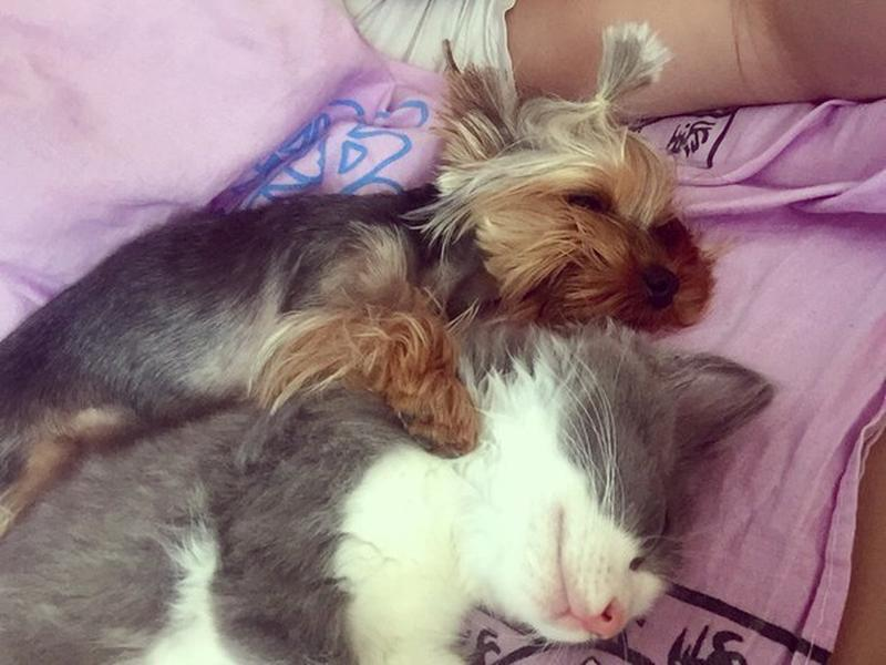 Передержка животных в домашних условиях