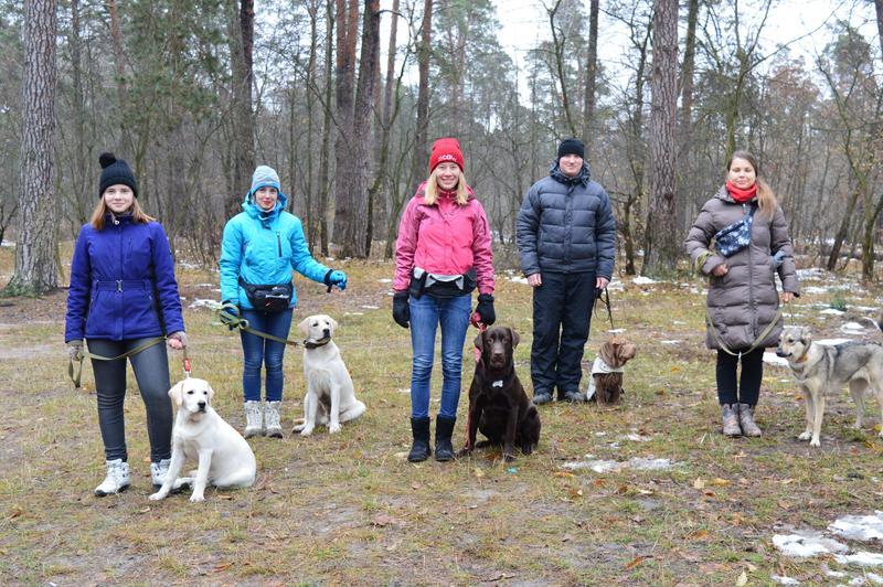Дрессировка собак индивидуально и в группах в пределах Киева