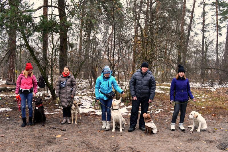 Дрессировка собак индивидуально и в группах в пределах Киева - Фото 2
