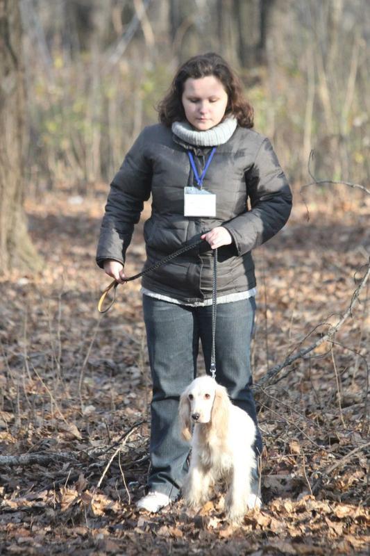 Дрессировка собак индивидуально и в группах в пределах Киева - Фото 3