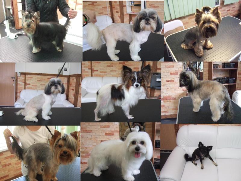 Стрижка собак любой породы - Фото 2