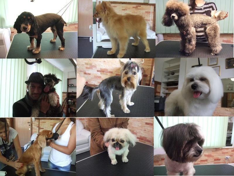 Стрижка собак любой породы - Фото 4