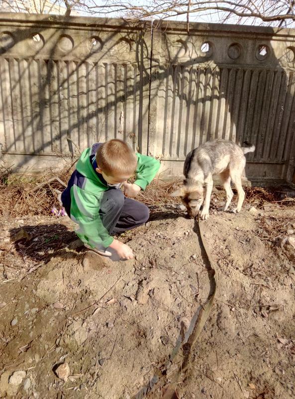 Передержка домашних животных - Фото 2