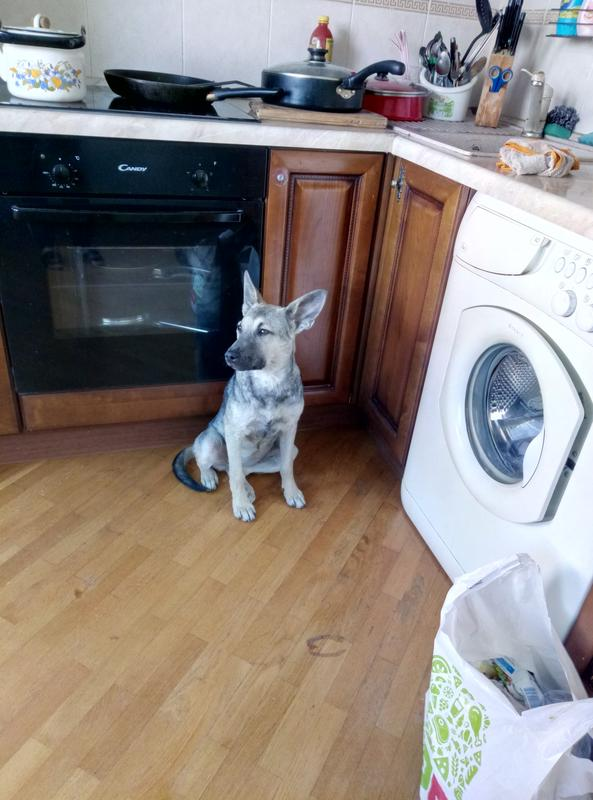 Передержка домашних животных - Фото 3