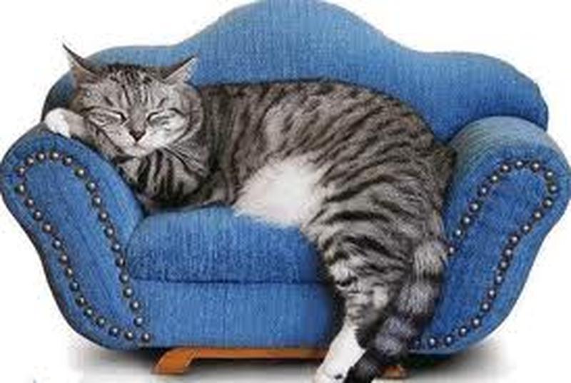 Передержка котика или собачки.