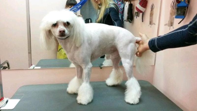 Стрижка собак и кошек в ветеринарной клинике, вызов на дом - Фото 4