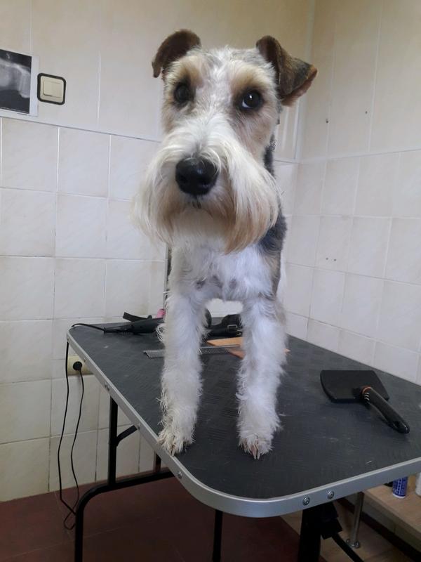 Стрижка собак и кошек в ветеринарной клинике, вызов на дом - Фото 7