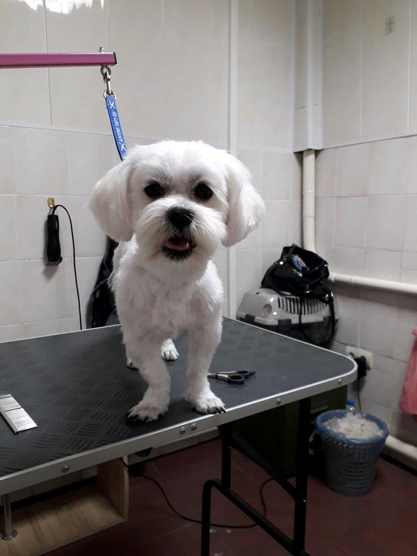 Стрижка собак и кошек в ветеринарной клинике, вызов на дом - Фото 19