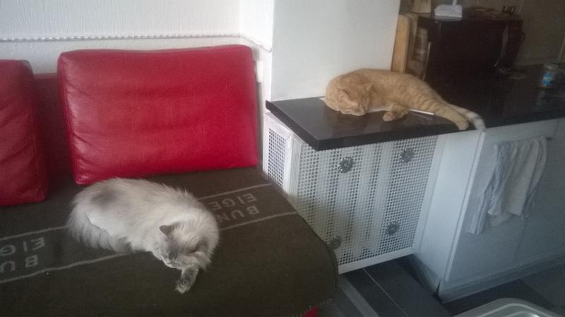 Гостиница для котиков