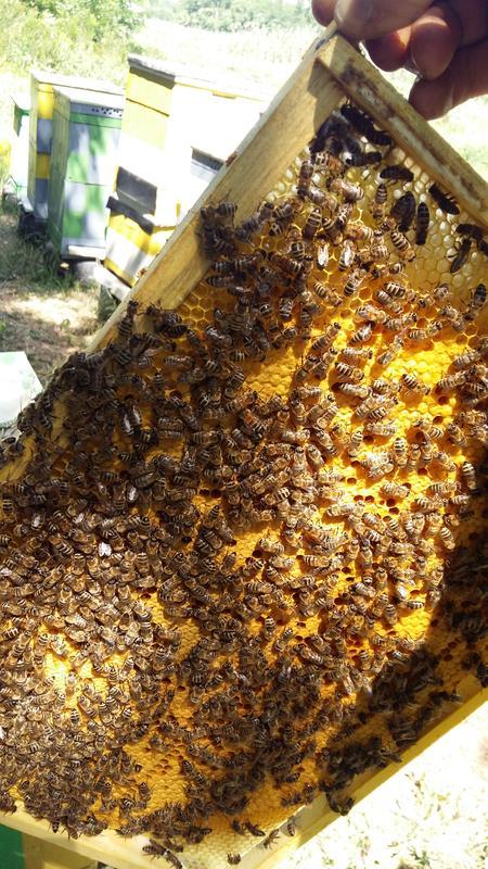 Пчеломатки УСПП