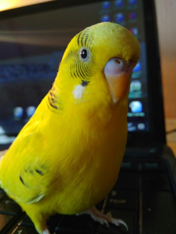 Передержка птиц и мелких животных