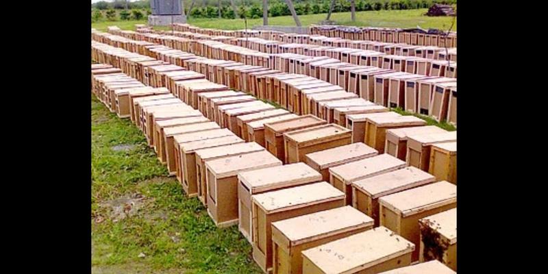 Бджолопакети 2020. Є своя доставка.