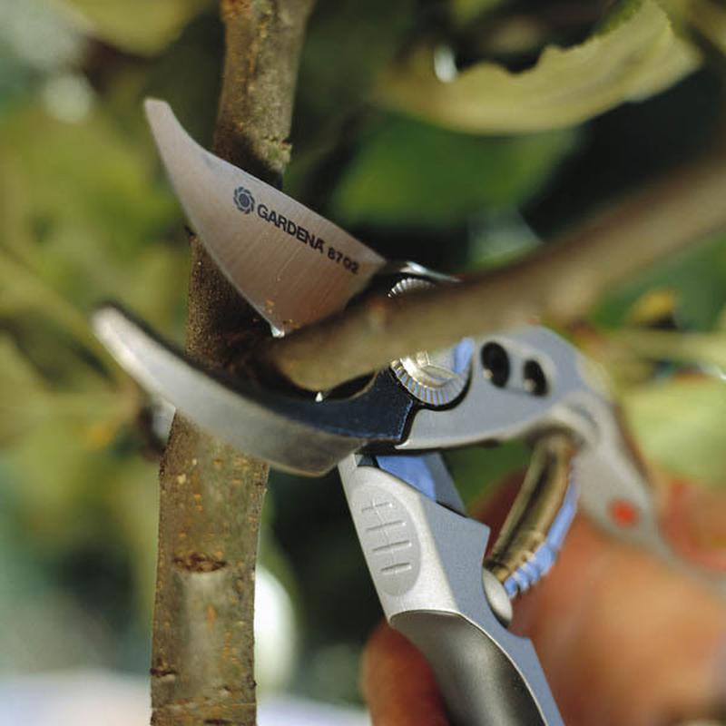 Профессиональная обрезка и формирование плодовых, ягодных, дек...