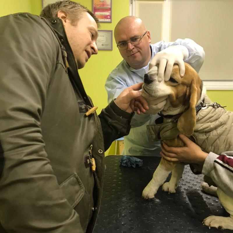 Прием ветеринара - Фото 3