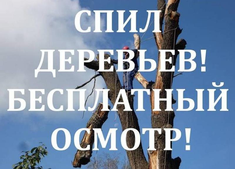 Услуги бензопильщика - Фото 2