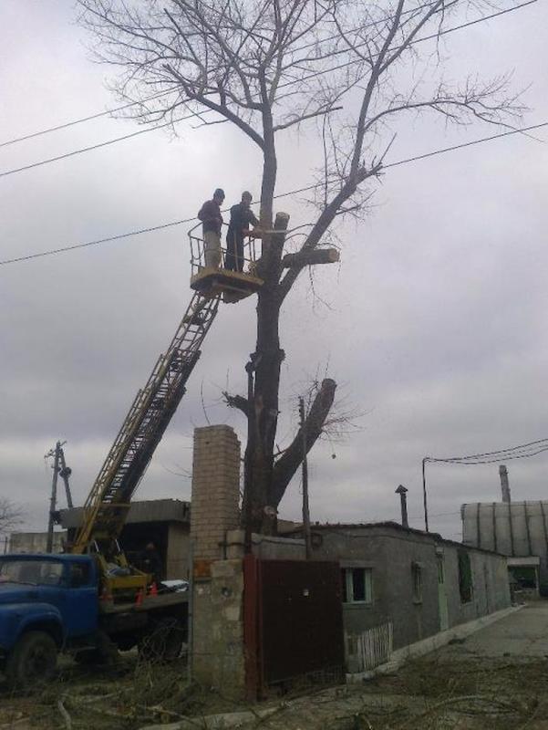 Обрезка Веток,  Спил деревьев. - Фото 2