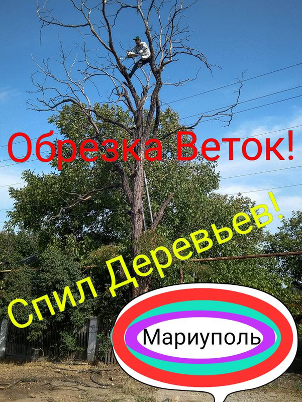 Обрезка Веток,  Спил деревьев. - Фото 3