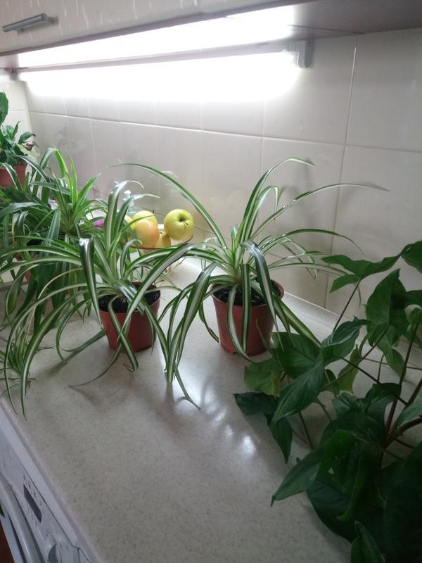 Уход и спасение комнатных растений