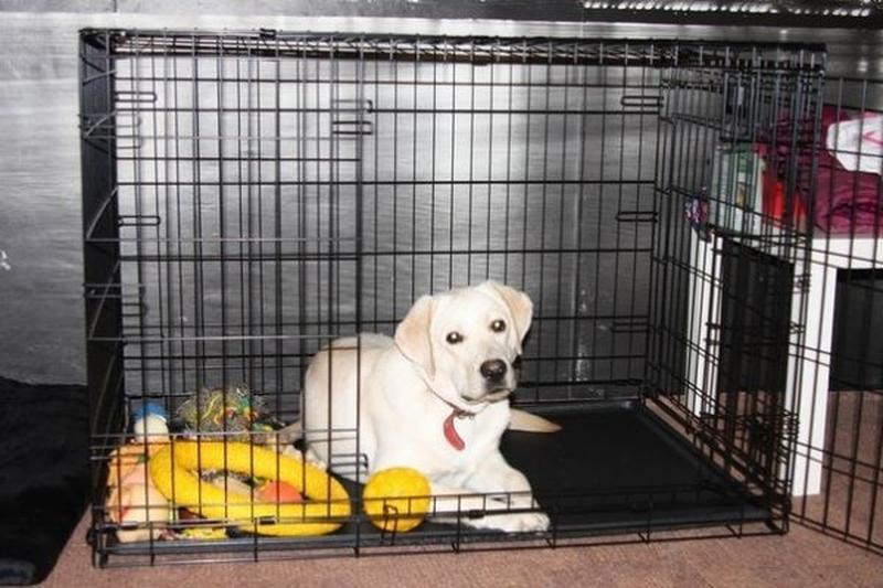 Бесплатная доставка! клетка для собак XL - 106х68х75h см